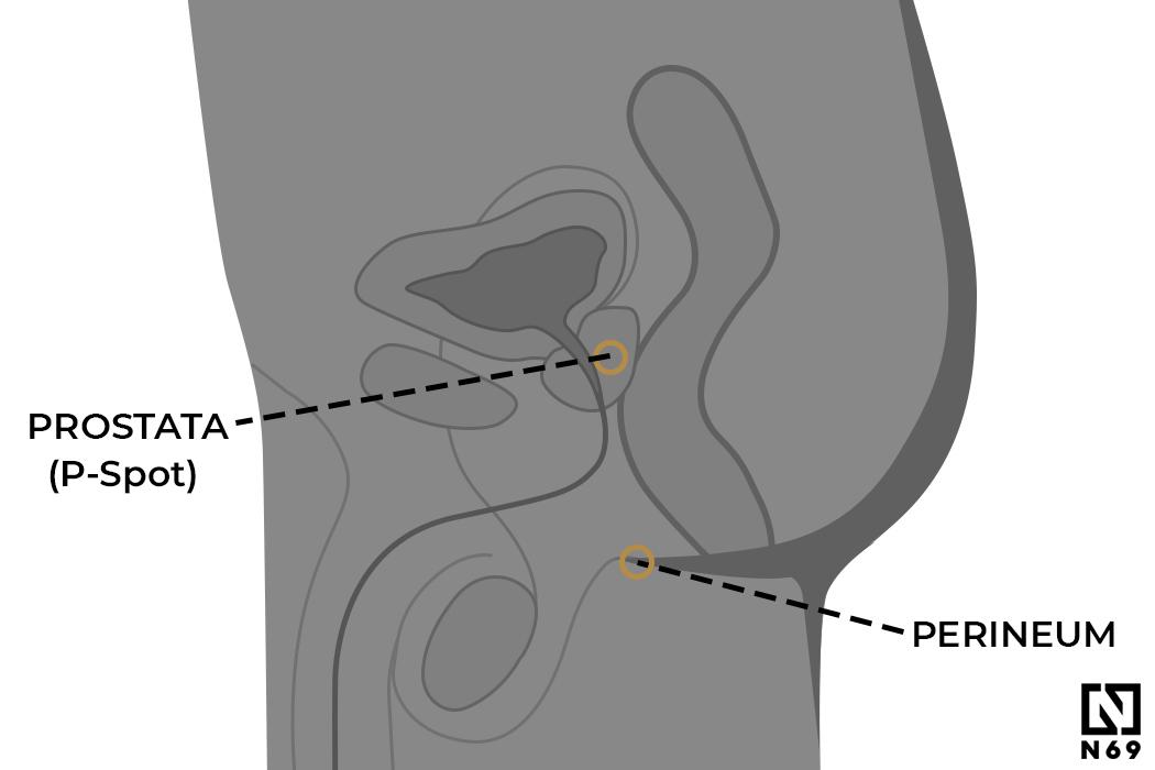 p-spot gruczoł prostaty u mężczyzn